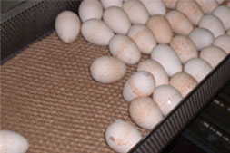Eggs on a Midlantic Paper Product